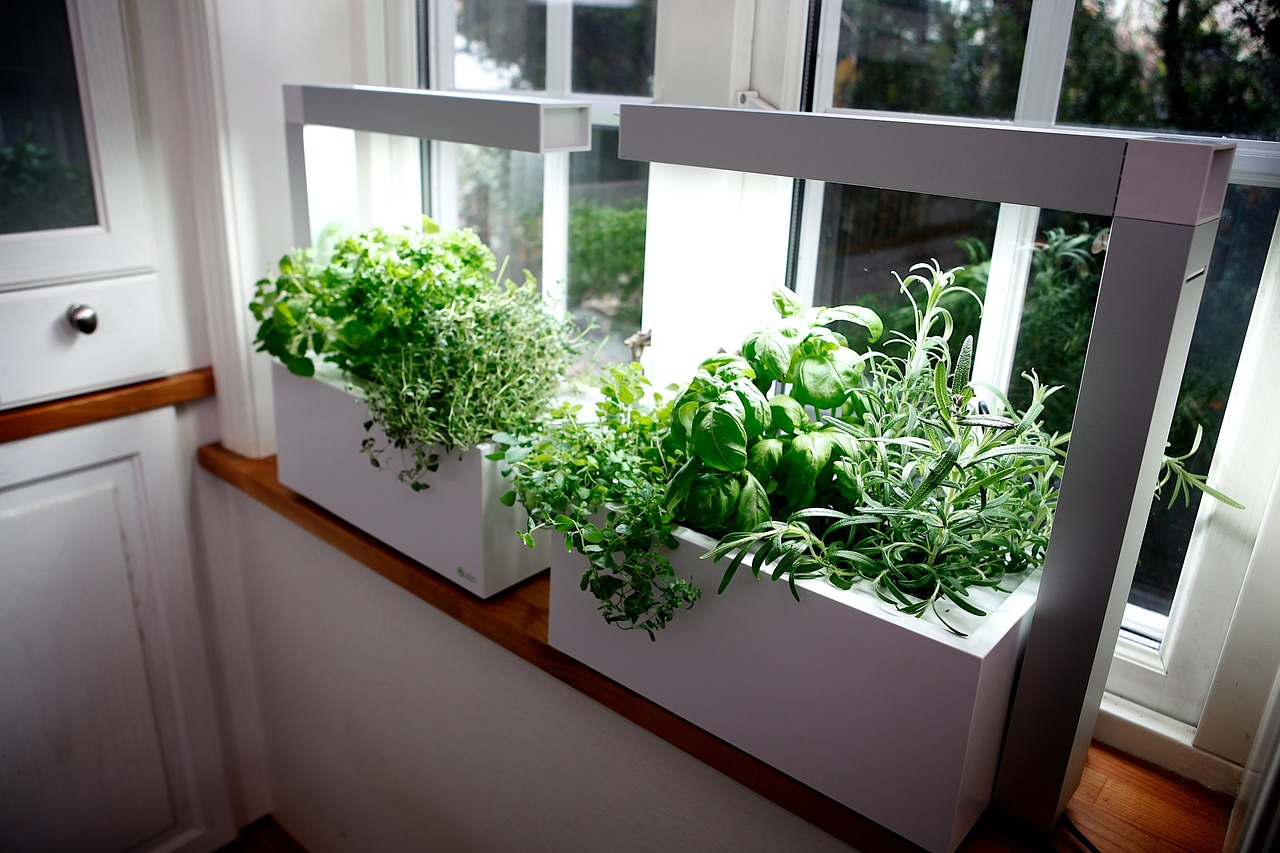 Large indoor herb container under grow lights