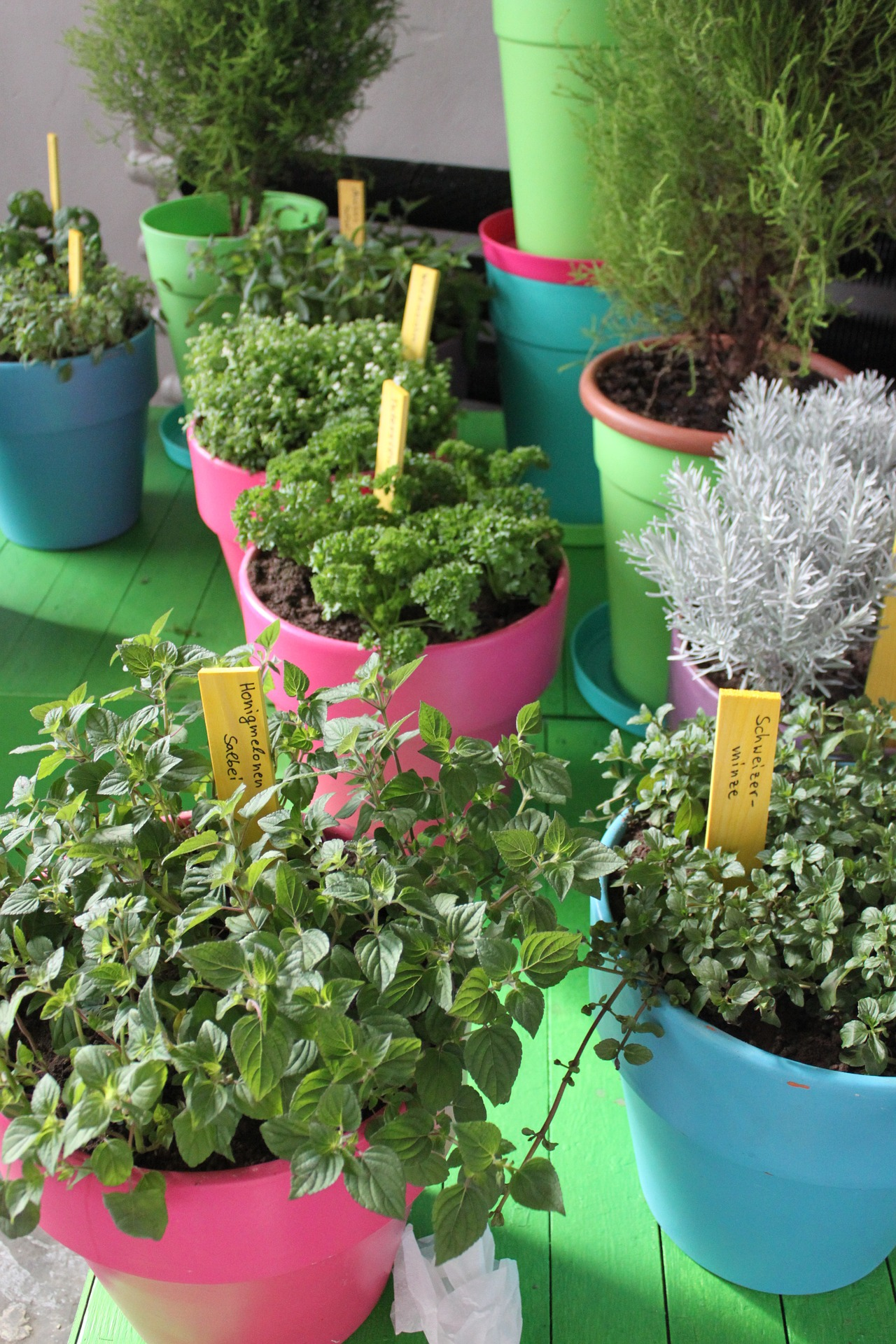 Pots of herbs in colorful planters